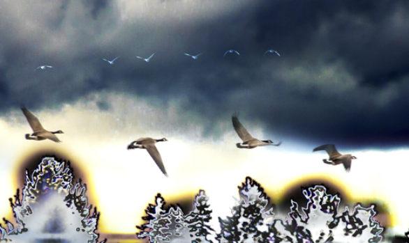 Les oies en vertical photographie
